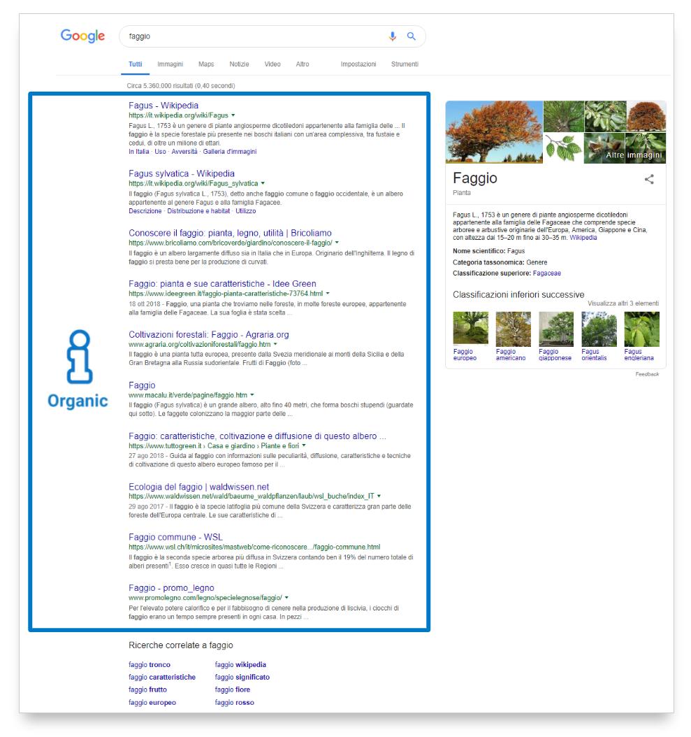 """Esempio di ricerca organica per la query """"faggio"""""""